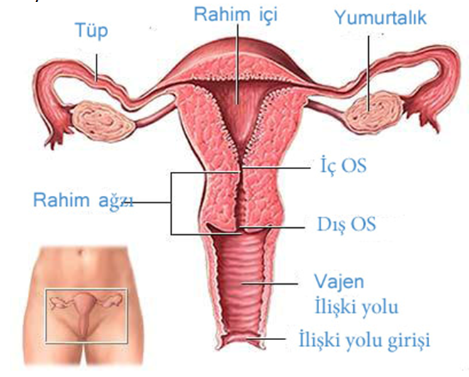 luchshaya-analnaya-porno-zrelih